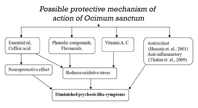 Possible protective mechanism of action of Ocimum sanctum